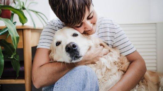 Kuriose Überraschung eines Hundes! (Symbolfoto)