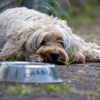 """Das Ordnungsamt kennt kein Erbarmen – Hund """"Joko"""" wird von seinem Lieblingsplatz verwiesen (Symbolfoto)."""