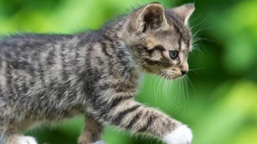 Eine kleine Katze afu Entdeckungstour.