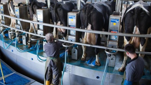 Die Milchwirtschaft steckt in einer tiefen Krise. Der Bauernverband fordert Hilfe von der Politik.