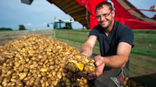 Ein Landwirt aus dem Kreis Uelzen zeigt seine frisch geerntete Frühkartoffeln der Sorte Annabelle.
