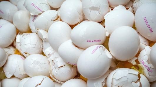 Im Auftrag der niederländischen Lebensmittelkontrollbehörde NVWA werden am 02.08.2017 rund eine Million Eier aus einer Geflügelfarm in Onstwedde (Niederlande) zerstört, weil sie mit dem Insektizid Fipronil verseucht sind. Mit Fipronil verseuchte Eier aus den Niederlanden tauchen in Deutschland in immer mehr Bundesländern auf. (zu dpa Niederländische Geflügelzüchter klagen über Eier-Verkaufsstopp vom 03.08.2017) Foto: Huisman Media/dpa +++(c) dpa - Bildfunk+++