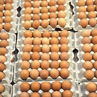 """ARCHIV - ILLUSTRATION- Eier lagern am 10.01.2010 auf einem Hühnerhof in Eierkartons und warten auf den Verkauf. Hunderttausende Eier aus den Niederlanden sind bereits in NRWzurückgerufen worden, nun zieht der Skandal um belastete Eier weitere Kreise. Denn den Niederländern wird empfohlen, zunächst ganz auf Eier zu verzichten. (zu dpa """"Insektizid Fipronil auch in deutschen Eier-Betrieben genutzt """" vom 02.08.2017) Foto: Carmen Jaspersen/dpa +++(c) dpa - Bildfunk+++"""