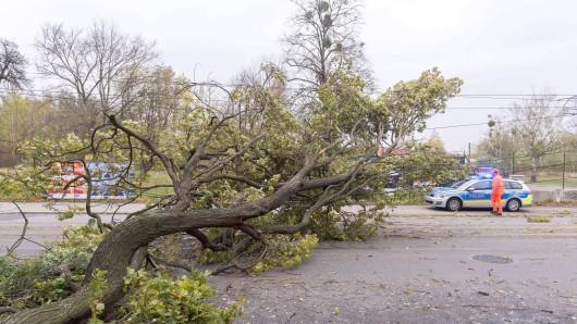 Der Baum war plötzlich auf die Straße gestürzt (Symbolbild).