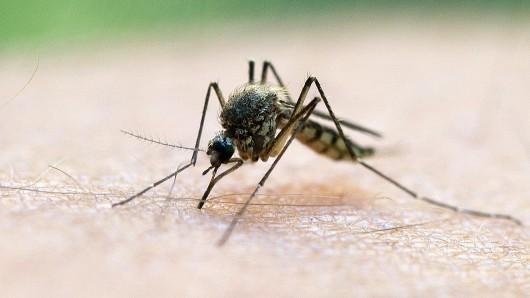 Mücken stören viele Menschen nicht nur wegen der juckenden Stiche, die sie hinterlassen: Sie summen auch laut. (Symbolbild)