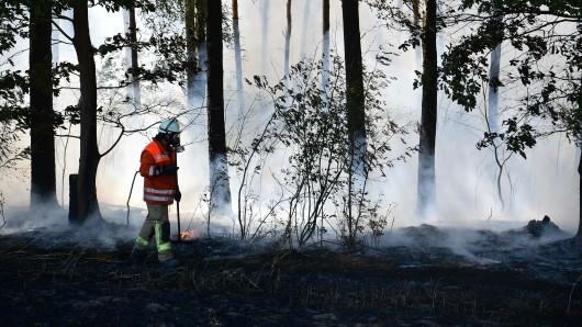 Ein Feuerwehrmann steht in einem brennenden Waldstück bei Wiechendorf.