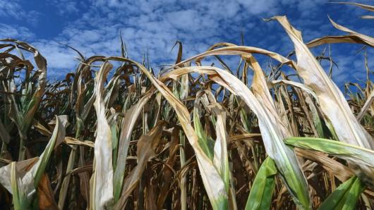 Viele Landwirte brauchen nach dem heißen Sommer einen Ansprechpartner (Symbolbild).