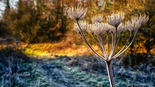 In den kommenden Tagen bleibt das Wetter kalt und sonnig. (Symbolbild)