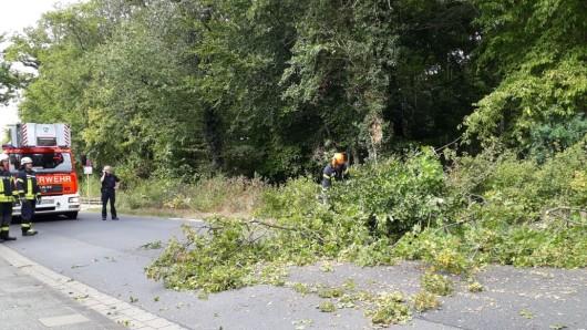 Die Ortsfeuerwehr Wolfenbüttel wurde  heute zu einem umgestürzten Baum in den Forstweg gerufen.