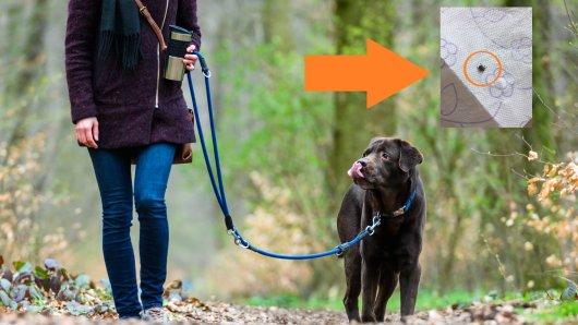 Bei einem Spaziergang mit ihrem Hund hat eine Frau aus Wolfenbüttel eine Entdeckung gemacht. Davor warnt sie nun andere Hundebesitzer.