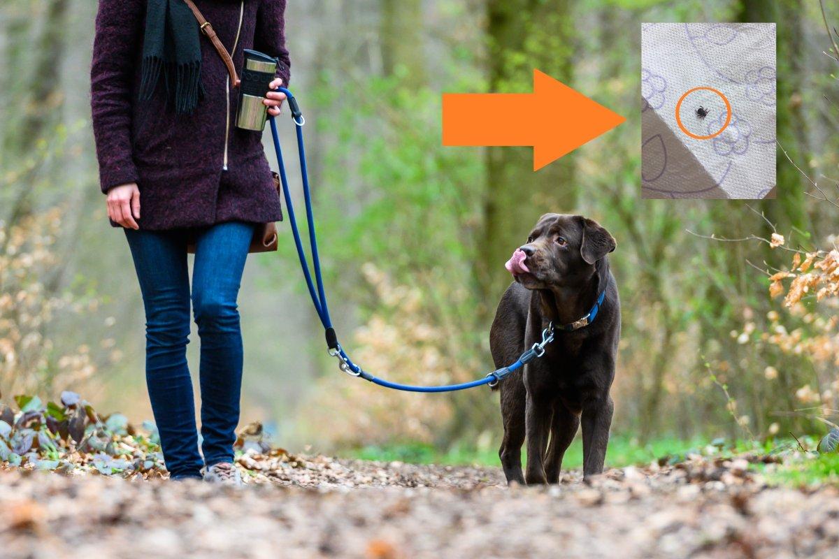 Hund: Frau geht mit Tier bei Wolfenbüttel spazieren – und schlägt Alarm!