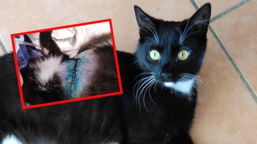 Katze Shira wurde mutmaßlich von einem Tierhasser aufgeschlitzt. Wochenlang kämpfte sie um ihr Leben.