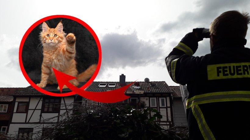 Wolfenb-ttel-Kater-muss-von-Dach-gerettet-werden-Feuerwehr-greift-zu-ungew-hnlicher-Ma-nahme