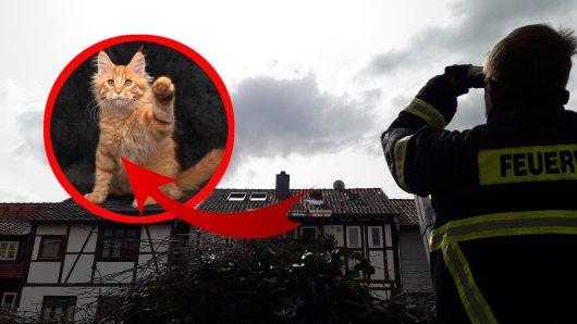 Die Feuerwehr Wolfenbüttel musste einen Kater vom Dach retten. Dafür mussten die Einsatzkräfte zu einer ungewöhnlichen Maßnahme greifen. (Symbolbild)
