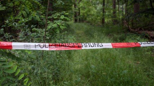 Wolfenbüttel: In einem Waldgebiet wurden mehrere Knochen gefunden. (Symbolbild)