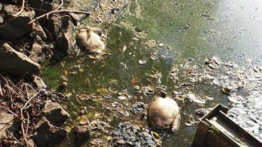Noch immer sterben Fische in dem Teich.